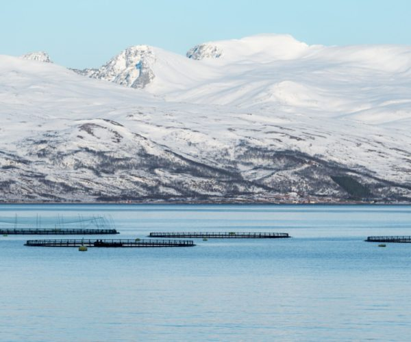 Holte Consulting leverer Prosjektledelse Konsulenter Prosjektrådgivning til fiskeoppdrett