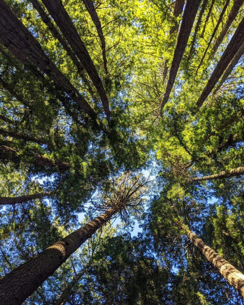Holte Consulting leverer Prosjektledelse Konsulenter Prosjektrådgivning til fornybar energi